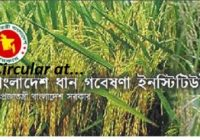 Bangladesh Rice Research Institute Job Circular 2018